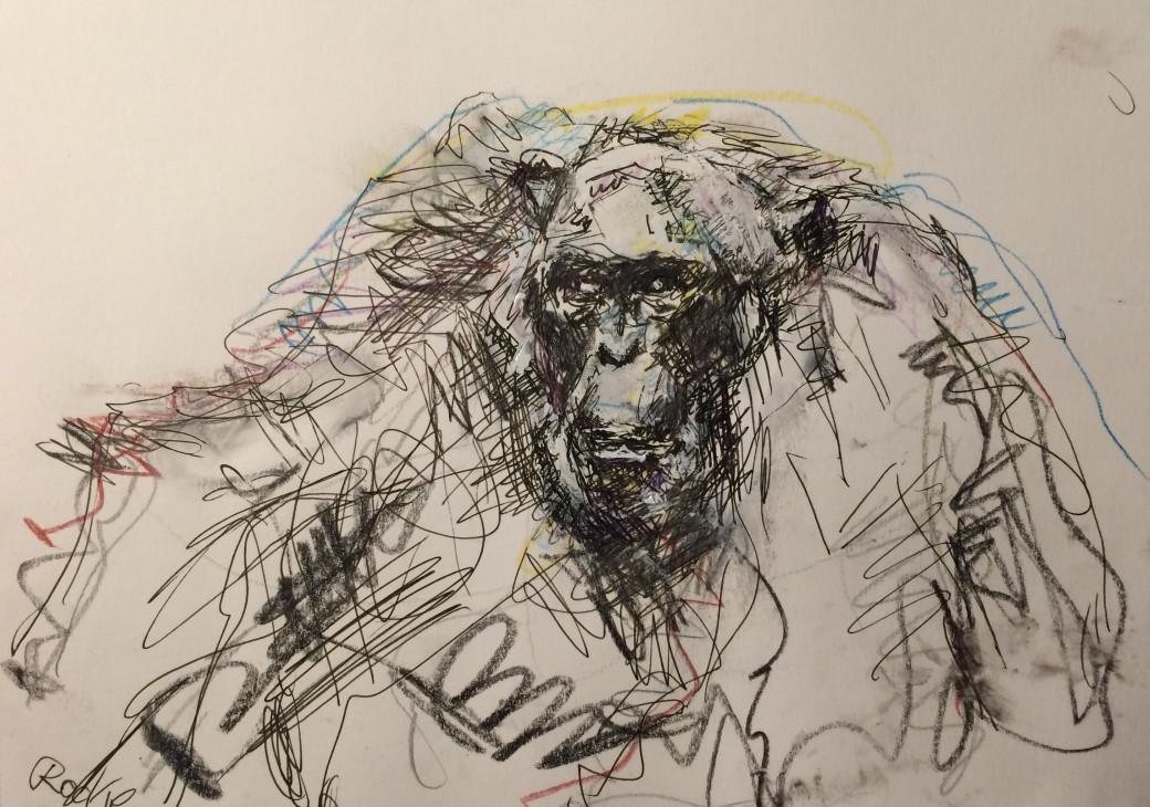 14, Zeichnung