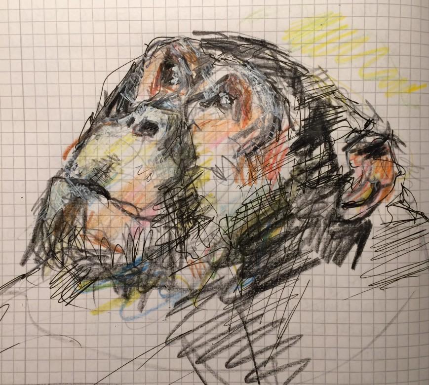 19, Zeichnung