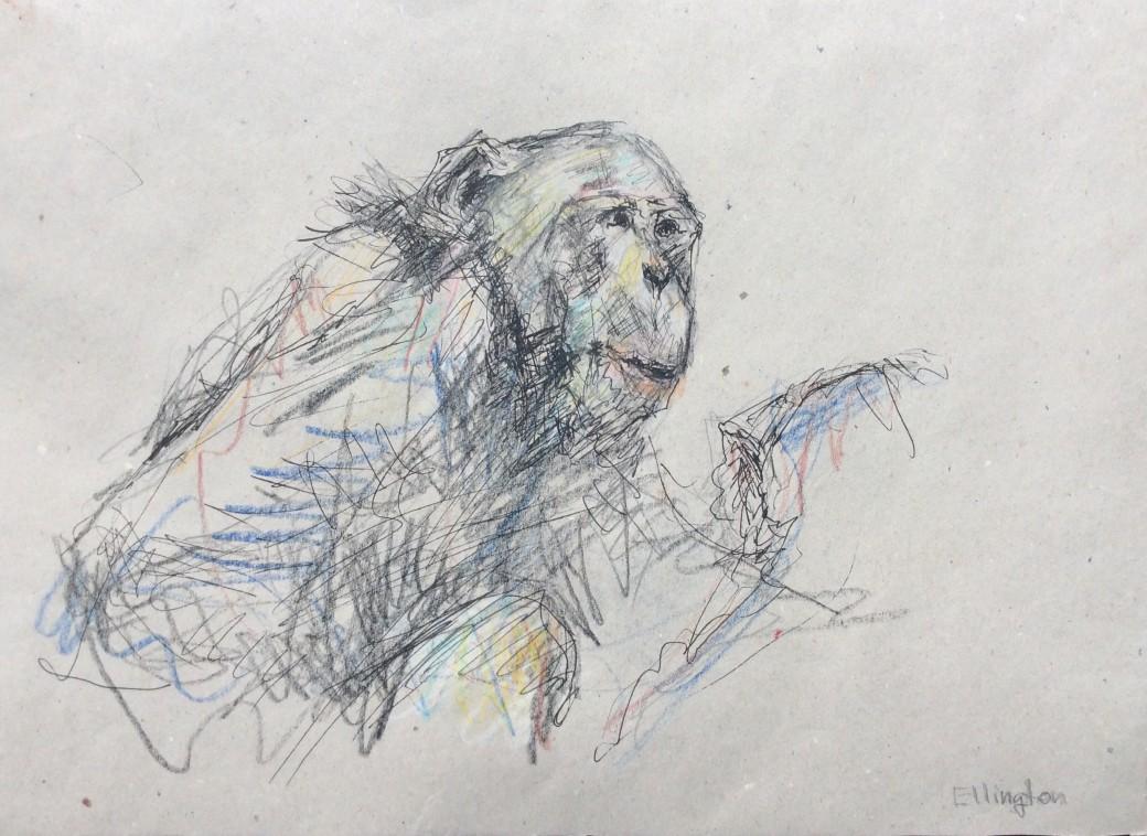 17, Zeichnung