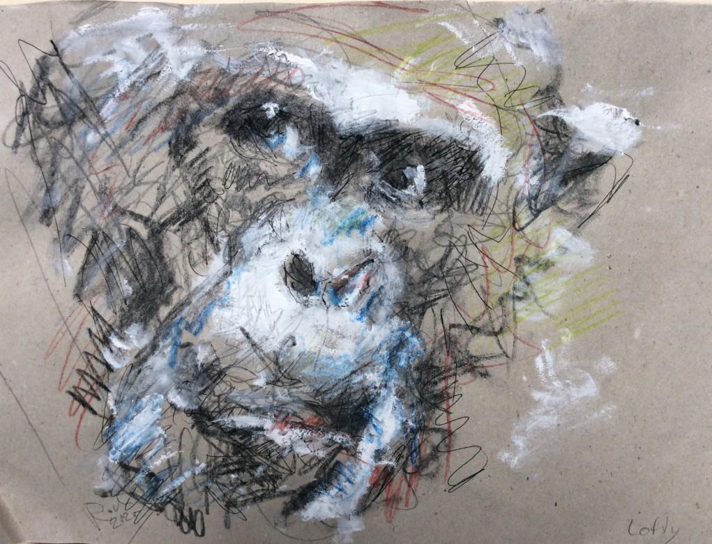 11 , Zeichnung