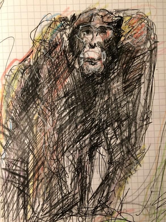 15, Zeichnung